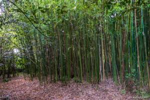 Bambouseraie au fond du Jardin - [Location Langoiran Bordaux Ligassonne]