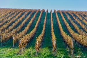 Vue sur les vignes - [Location Langoiran Bordaux Ligassonne]